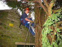 A member of the Galloway Tree Services Team at work