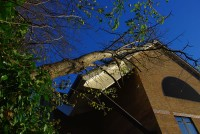 Fallen Tree on Hospital Roof