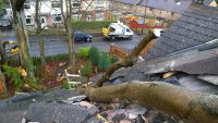 house roof damaged by fallen tree